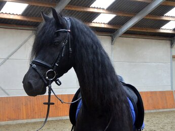 Reier is sold to a lovely family in the UK - Congratulations with this magnificent looking horse!!