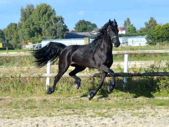 Selma is sold to Miss. Ewa in Sweden - Congratulations with your 2nd horse from us!!