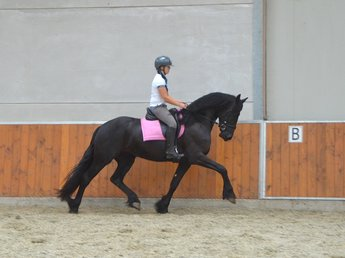 Rosalinda is sold to Miss. Dagmar in Holland - Congratulations with this fairytale looking mare!