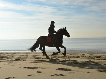 Ringo is sold to a lovely family in Holland - Congratulations with this nice gelding!!