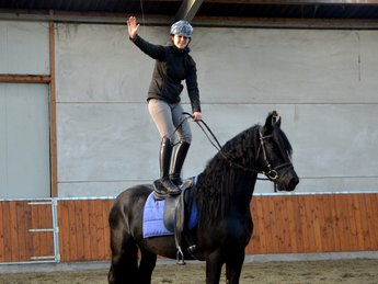 Pelle is sold to the USA - Congratulations with this pretty family horse!