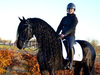 Evert is sold to a lovely family in Holland - Congratulations with this fantastic horse!!
