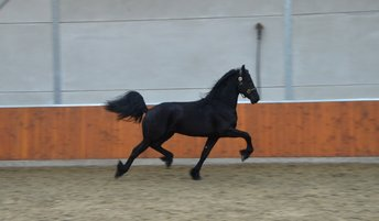 Ties - Bartele 472 Sport x Meinse 439 x Jasper 366 Sport+Pref - Incredible mover, comes out of a Famous mother line!
