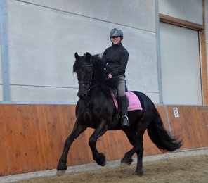 Reina is sold to Miss. Lorraine in UK - Congratulations with buying this beautiful mare!