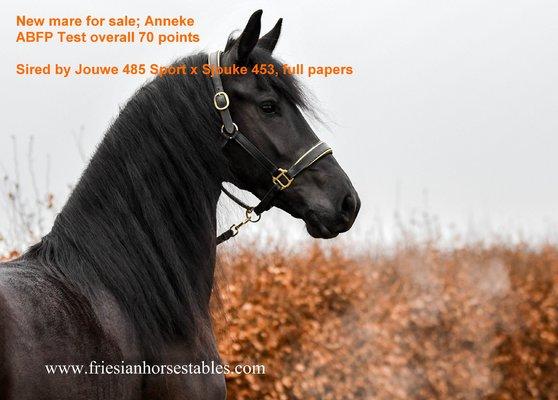 Anneke new arrival