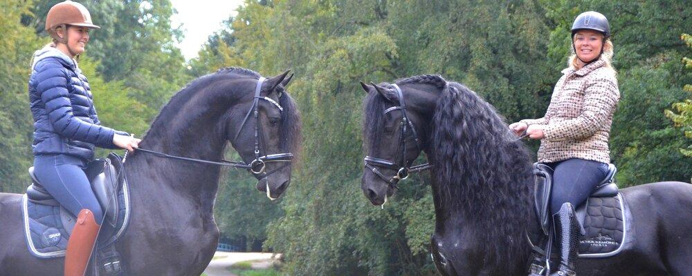FHS Stallions