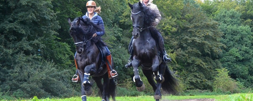 FHS Stallions 2