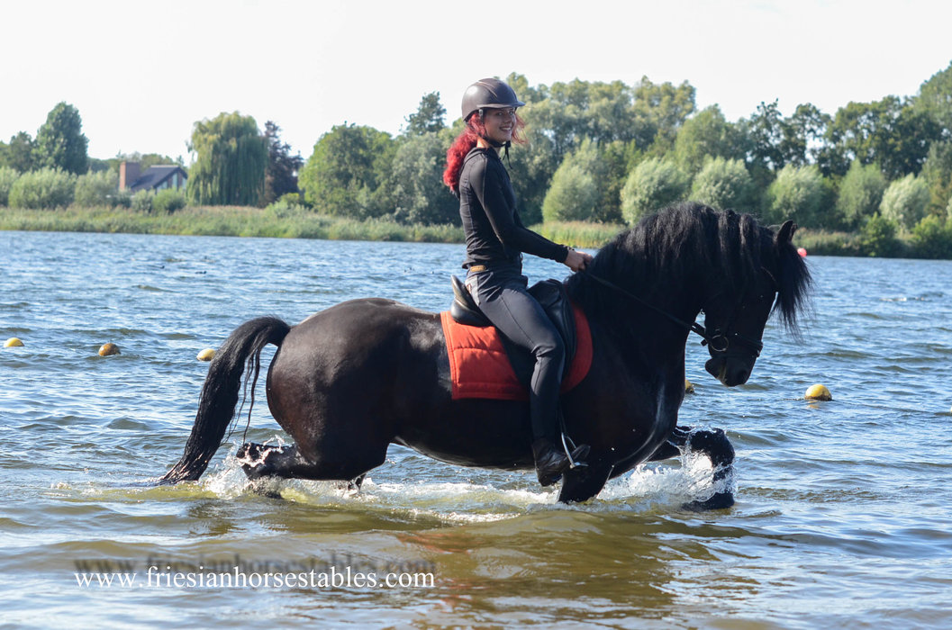 Zeus is sold to Debby in The Netherlands - Congratulations with this beautiful gelding!!