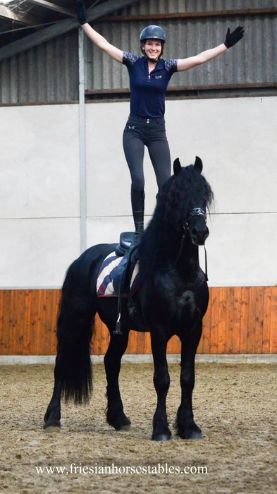 Bono - Alke 468 Sport x Olof 315 Sport+Pref  - Fairytale stallion with long manes and a golden personality!