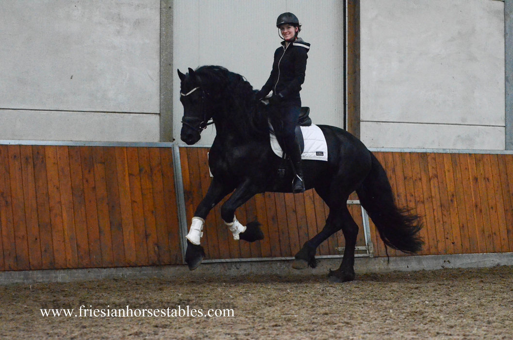 Xander - Hessel 480 Sport x Beart 411 Sport+Pref - CO selected stallion - First premium as a foal - Ster stallion with a lot of expression and talented movements!!
