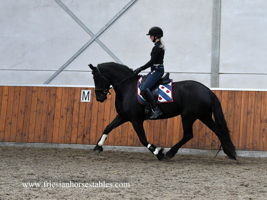 Bijou - Tonjes 459 Sport x Jasper 366 Sport-Elite+Pref - 3rd Premium stb mare with good papers!