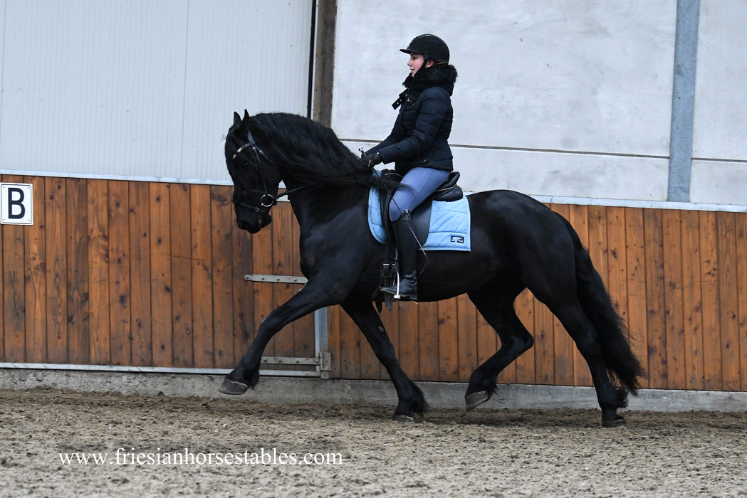 Charley aka Mr Handsome is sold to Jeannette in Holland - Congratulations with this pretty and good moving horse!!