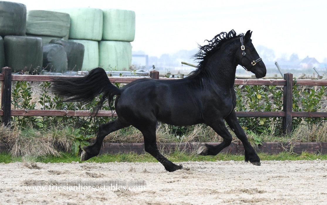 Baldur - Wolfert 467 Sport x Ulke 338 Sport