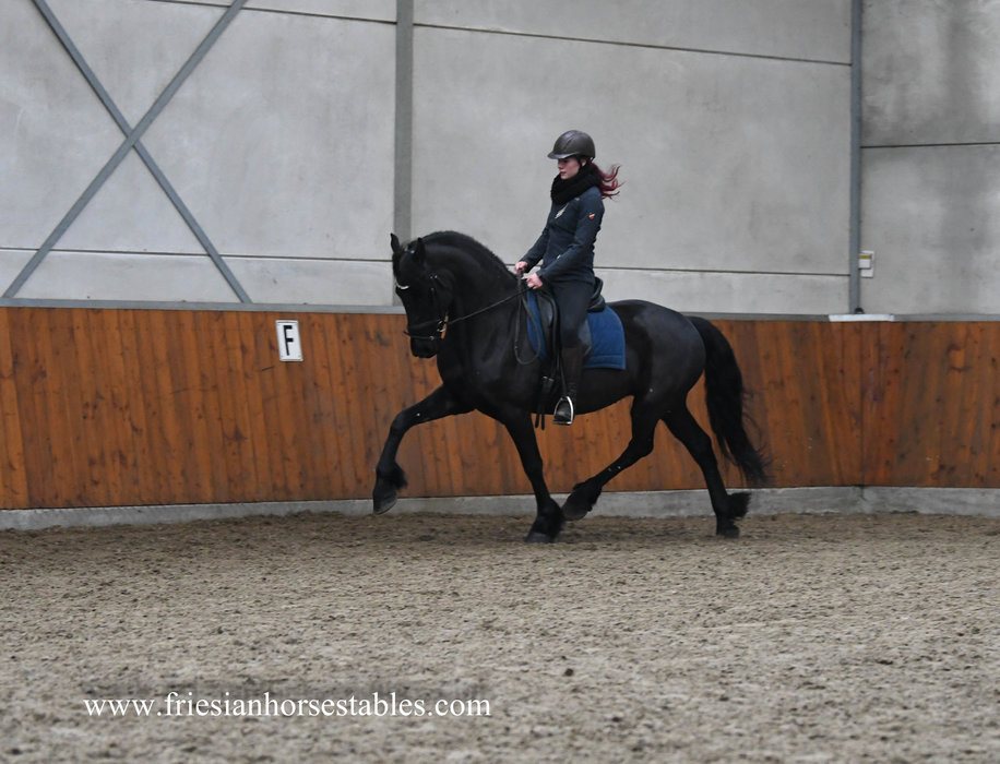 Wim - Norbert 444 Sport+Pref x Tsjalke 397 - Fantastic mover and a teddy bear too!!