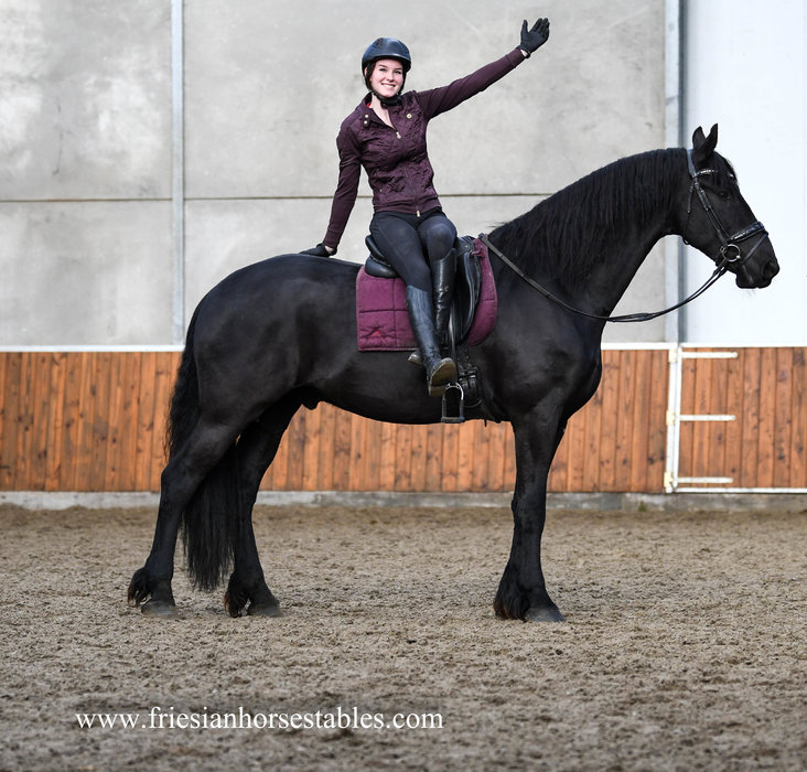 Thijs is sold to Minza in the USA - Congratulations with this fantastic gelding!!
