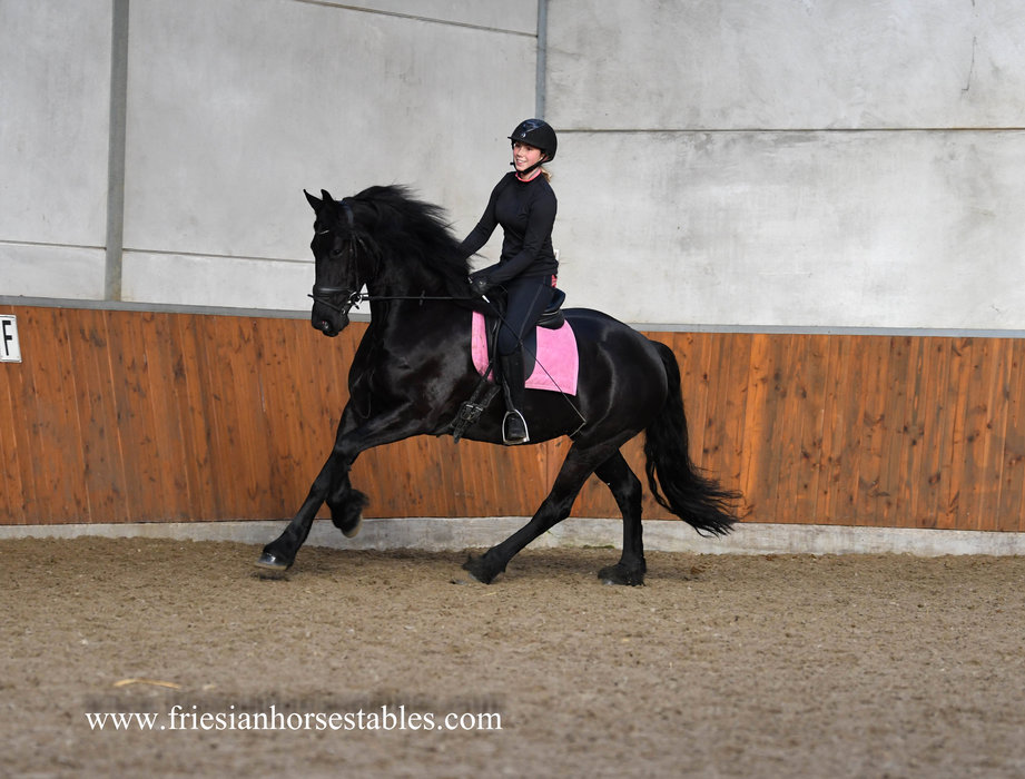 Ulrieke is sold to Nathalie in Holland - Congratulations with this amazing mare!!