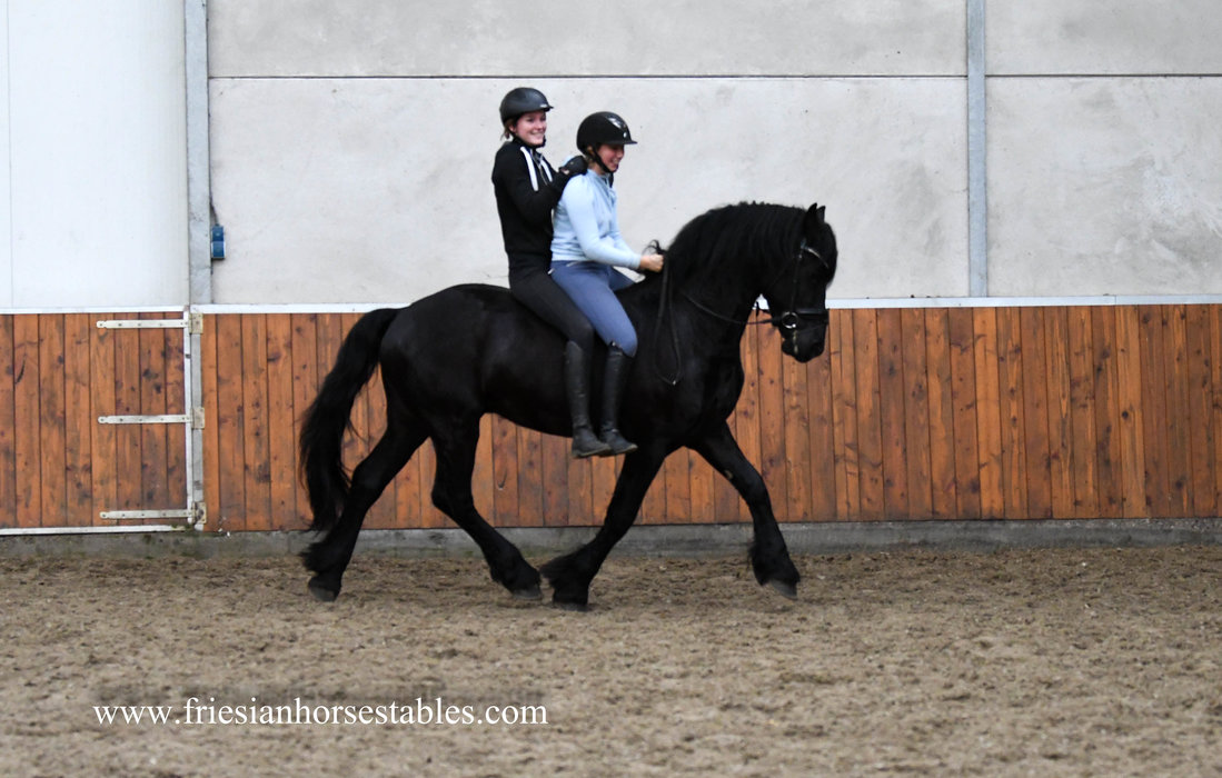 Haike is sold to Carla in Holland - Congratulations with this pretty and golden personality gelding!!