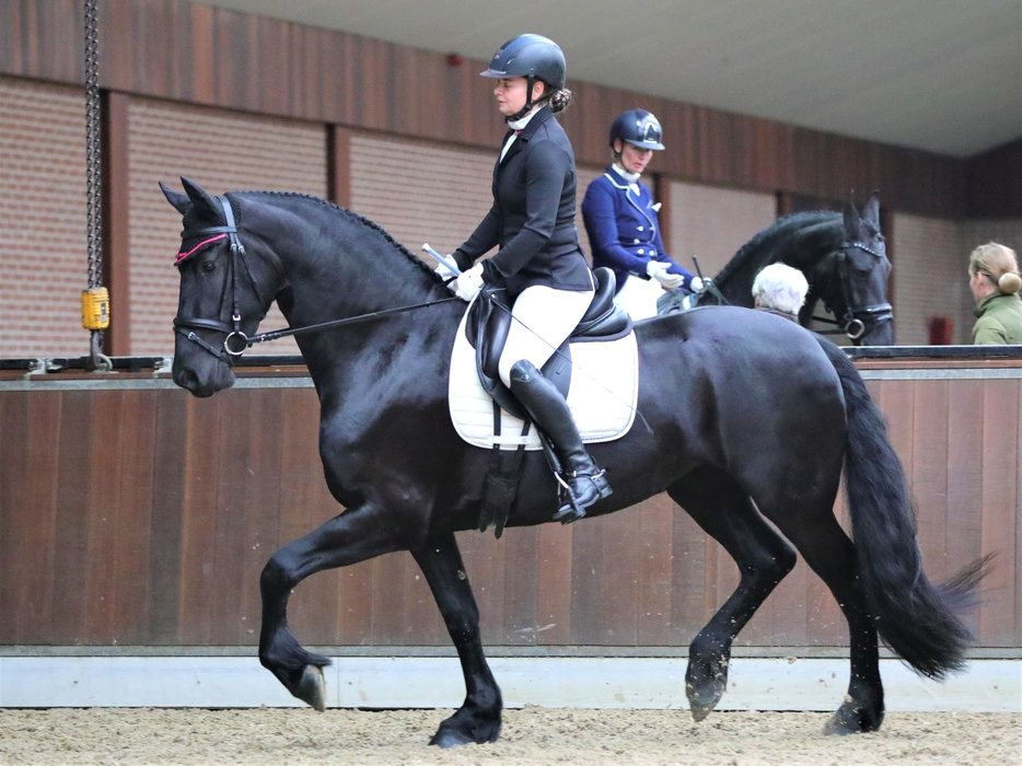 Alice is sold to Kira in Holland - Congratulations with this beautiful, sweet pregnant 3rd pr. full papered mare!!