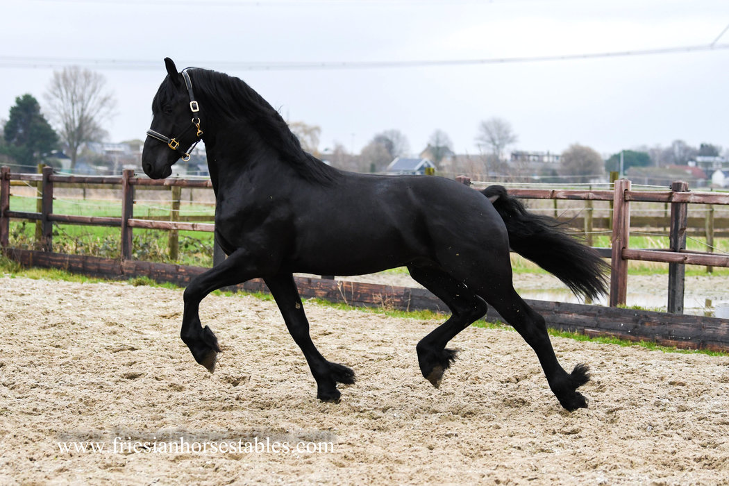 Epke - Onne 376 Sport x Beart 411 Sport+Pref - Our all time favorite special stallion!!