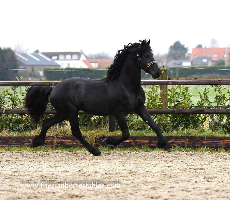 Abe is sold to Patricia in Germany - Happy birthday and congratulations with this natural beauty!!