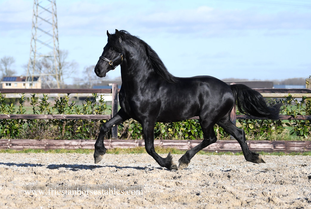 Fabries is sold to Sandra in Holland - Congratulations with beautiful Eise 489 Son - Your Dream came true!!