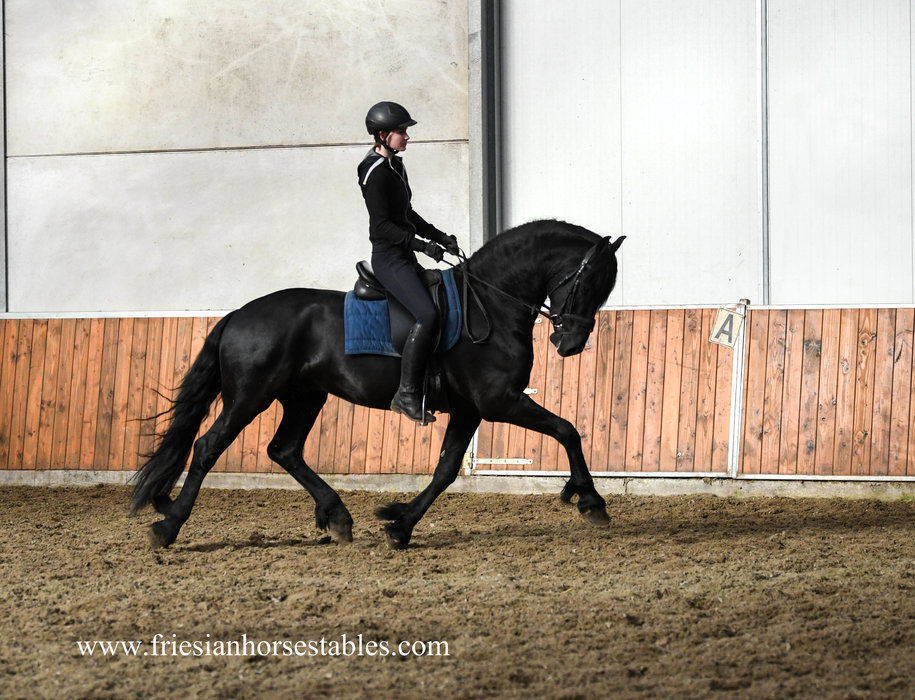 Douwe is sold to Tore in Norway - Congratulations with this beautiful Ster stallion!!