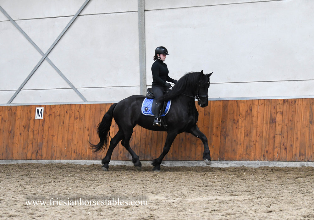 Calibra is sold to Marisca in Holland - Congratulations with this beautiful Ster mare!!
