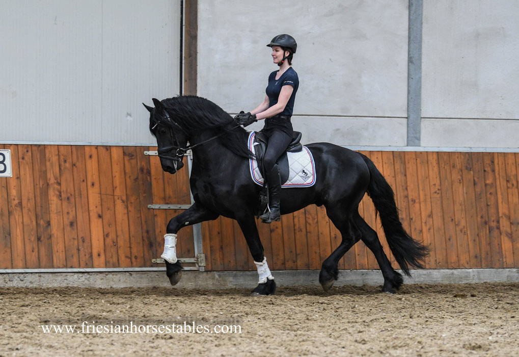 Eelke is sold to Kristina in Austria - Congratulations with this charming boy!!