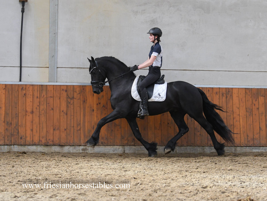 Bindert is sold to Karol in The USA - Congratulations with this amazing horse!!