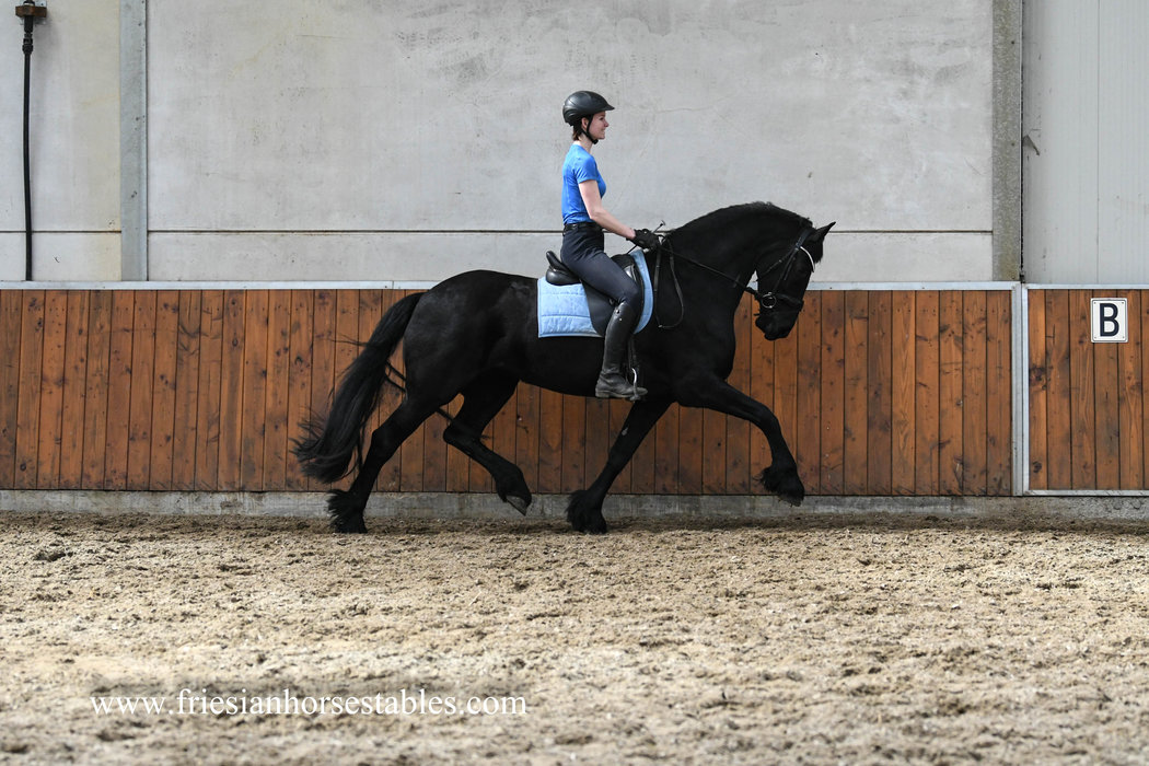 Jelske is sold to Kristel in The Netherlands - Congratulations with this sweet and lovely mare!!