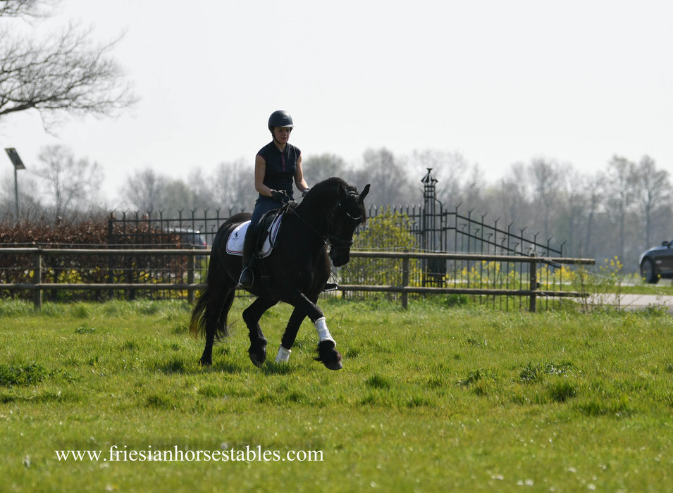 Valerie is sold to Monique in The Netherlands - Congratulations with this fantastic mare!!