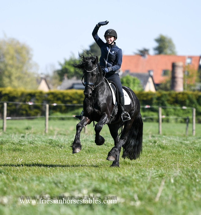 Bûke - Wimer 461 Sport x Hearke 254 Sport+Pref - Well ridden on L level dressage!!