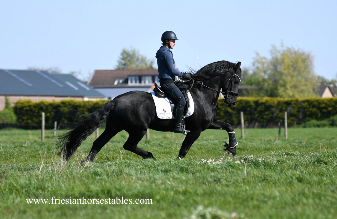 Bonne is sold to Lieke in Holland - Congratulations with this Black Beauty!!