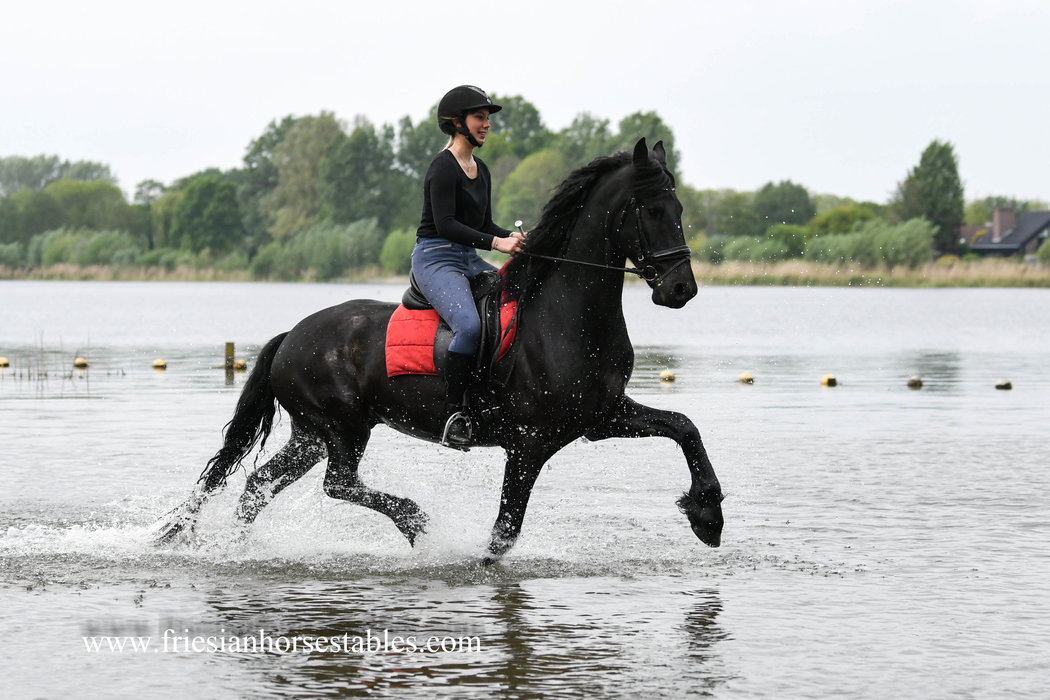 Wim is sold to Germany to a wonderful family - Congratulations with this fantastic gelding!!