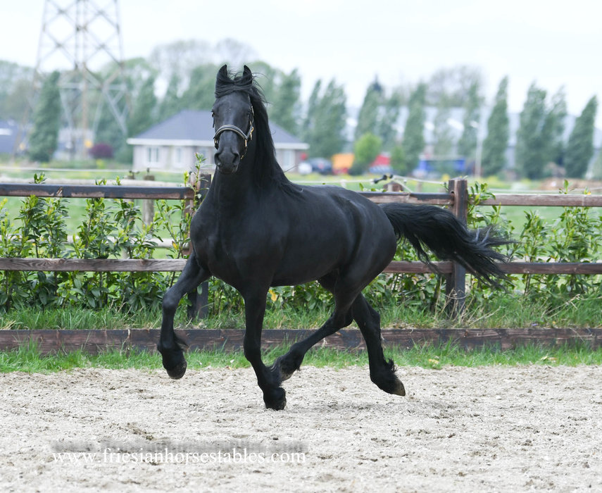 Dora is sold to Anna in The Netherlands - Congratulations with this charming lady!!