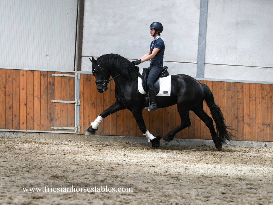 Durk is sold to Family Dijkstra in The Netherlands - Congratulations with this fantastic mover!!