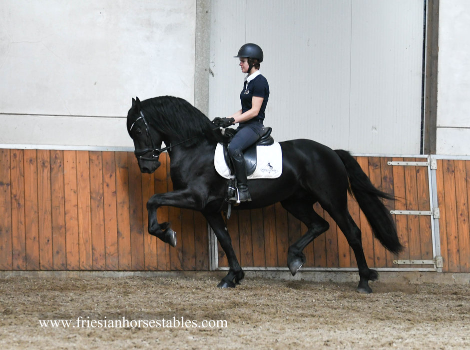 Floris - Meinte 490 Sport x Mewes 438 - Charismatic stallion with lots of expression!!