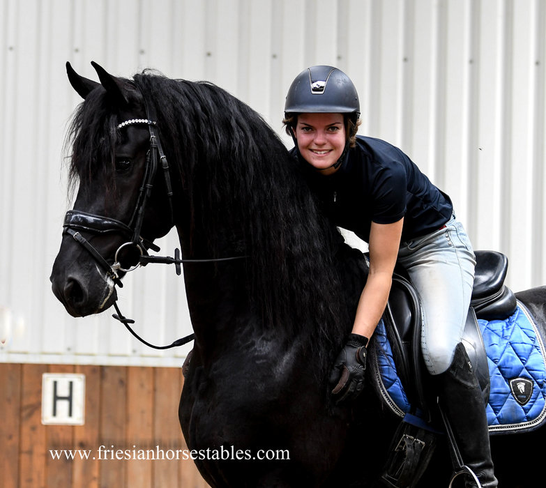 Florus is sold to Esmee in Holland - Congratulations with this charming stallion!!