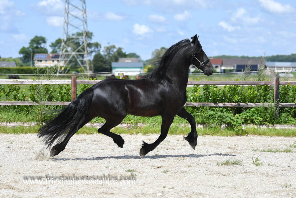 Brecht is sold to Charissa in Holland - Congratulations with this beautiful mare!!