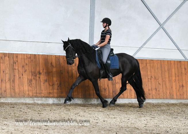 Benthe - Tsjalle 454 Sport-Elite+Pref x Folkert 353 Sport - Nice mare!!