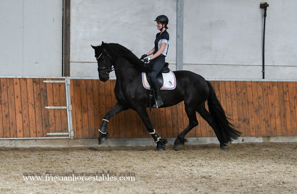 Anna is sold to Feik and her daughter Veerle - Congratulations with this beautiful pregnant mare!!