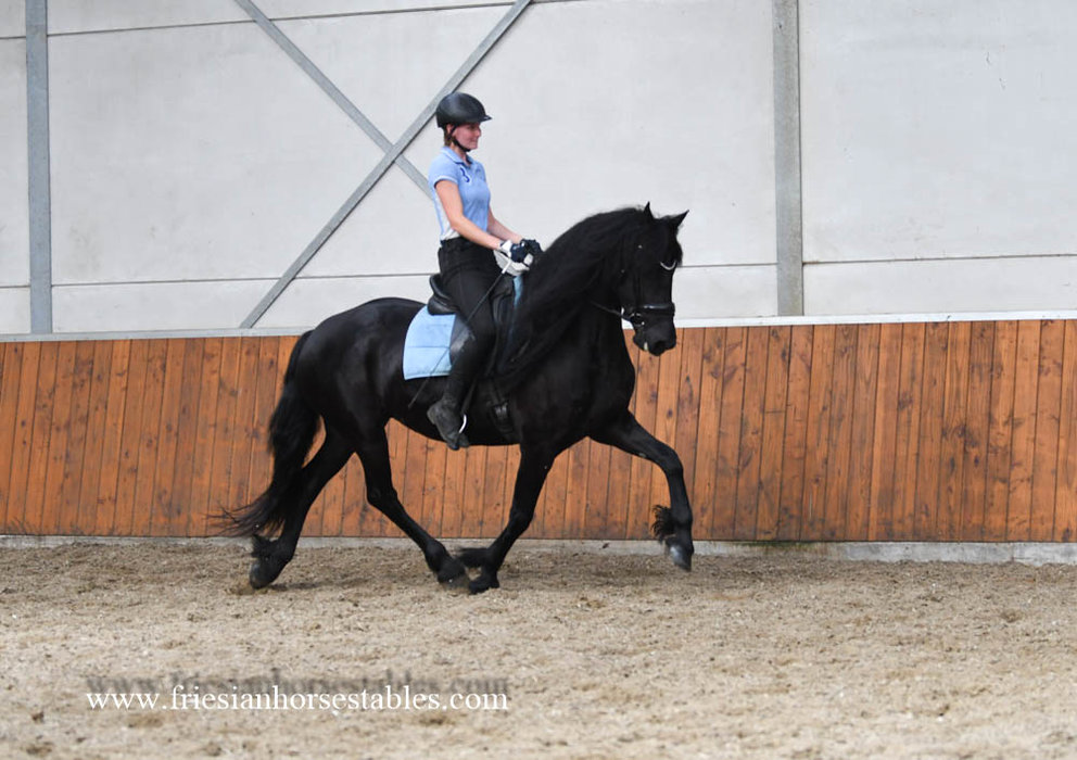 Sloerie is sold to Stephanie in The USA - Congratulations with this fairytale Pregnant Ster mare!!