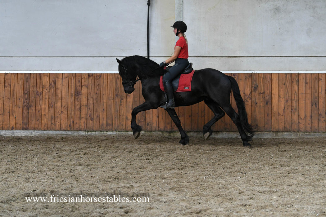 Dapper is sold to Charlotta in Sweden - Congratulations with this dream comes true!!
