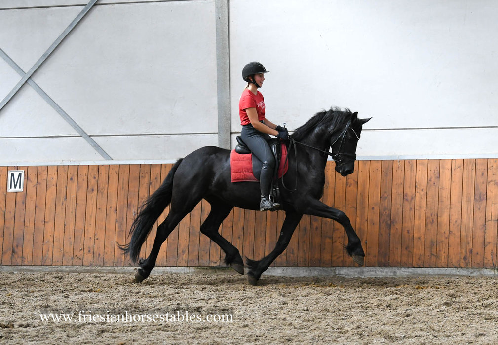 Frearkje - Thorben 466 Sport-Elite x Andries 415 Sport - Nice mover with good looks!