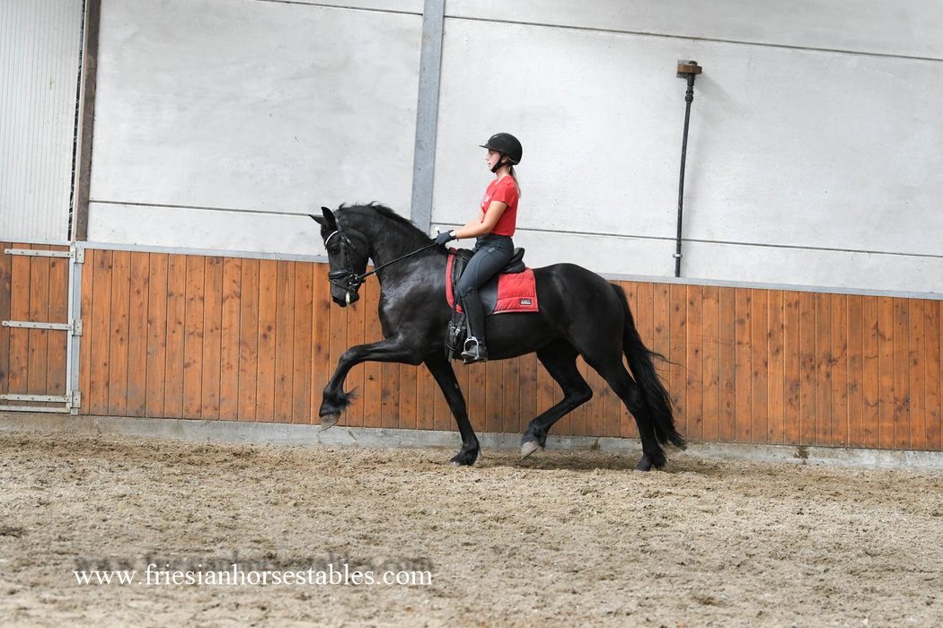 Frearkje is sold to Sonja in Holland - Congratulations with this nice future sports mare!!