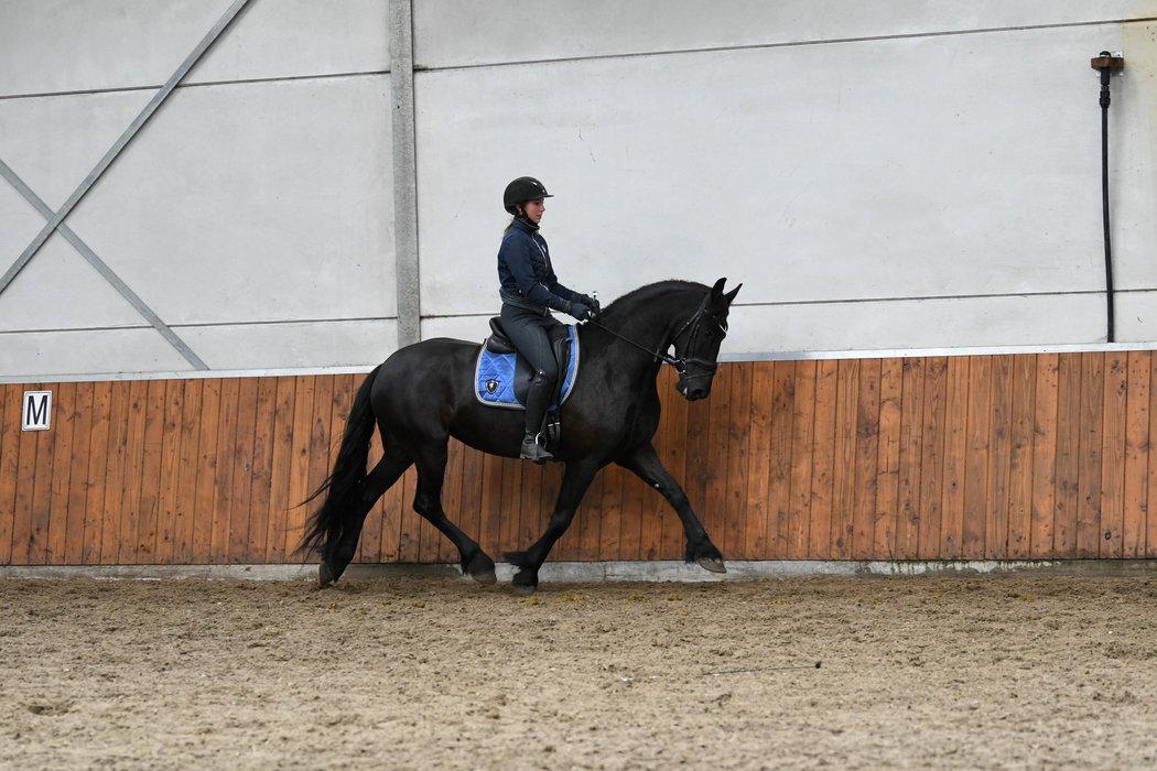 Fajah - Tsjalle 454 Sport-Elite+Pref x Wikke 404 Sport - Full papered lovely mare!