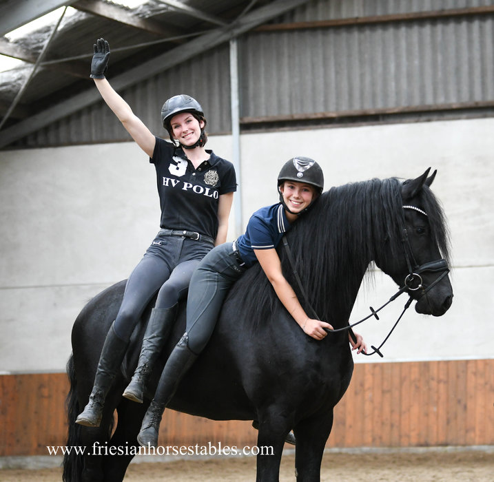 Friso is sold to Caroline in Holland - Congratulations with this amazing talented Ster stallion!!