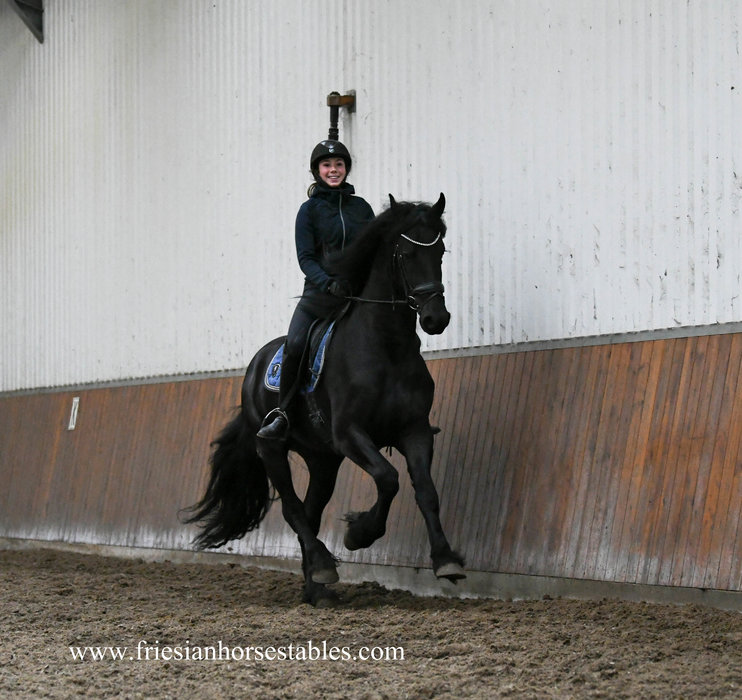 Hearre is sold to Renske in Holland - Congratulations with this black beauty dream horse!!