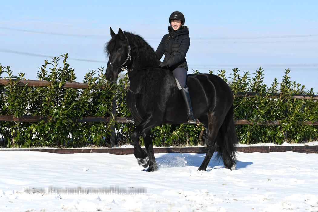 Tiarda is sold to Debbie in Sweden - Congratulations with this fairytale looking mare!!