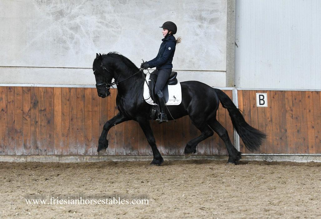 Iwan - Eise 489 Sport-Elite x Stendert 447 Sport - Great mover!!